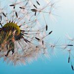 Die Gräserpollen sind im Anflug - meine besten Tipps für Allergiker!